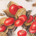 Beverly Allen Collection with hazelnuts, pomegranate and Michelia seedpod Watercolour on vellum
